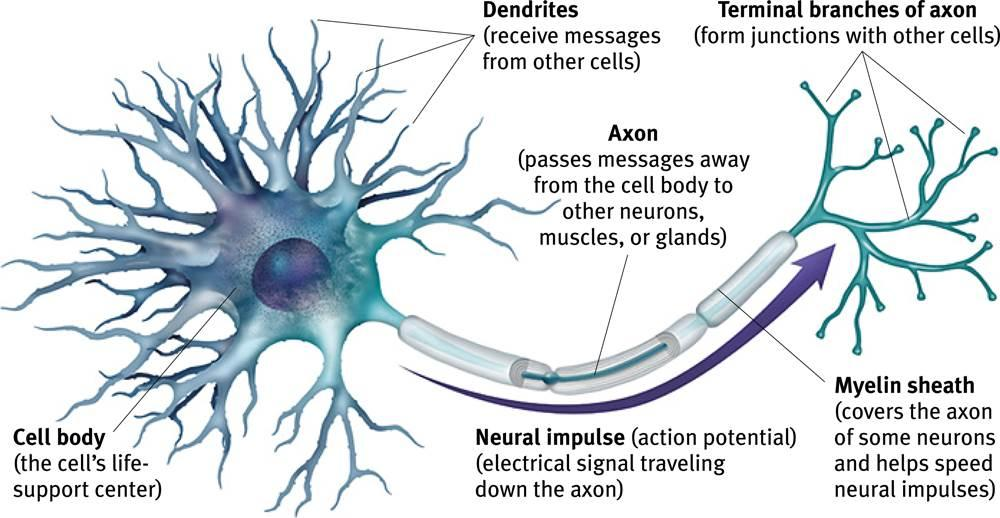 Motor neuron disease neurological issues herbal care for What is motor neurone disease symptoms