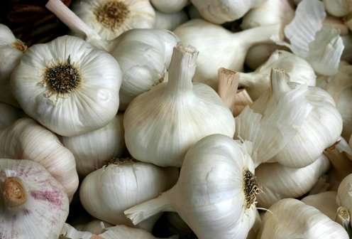 Garlic Fight